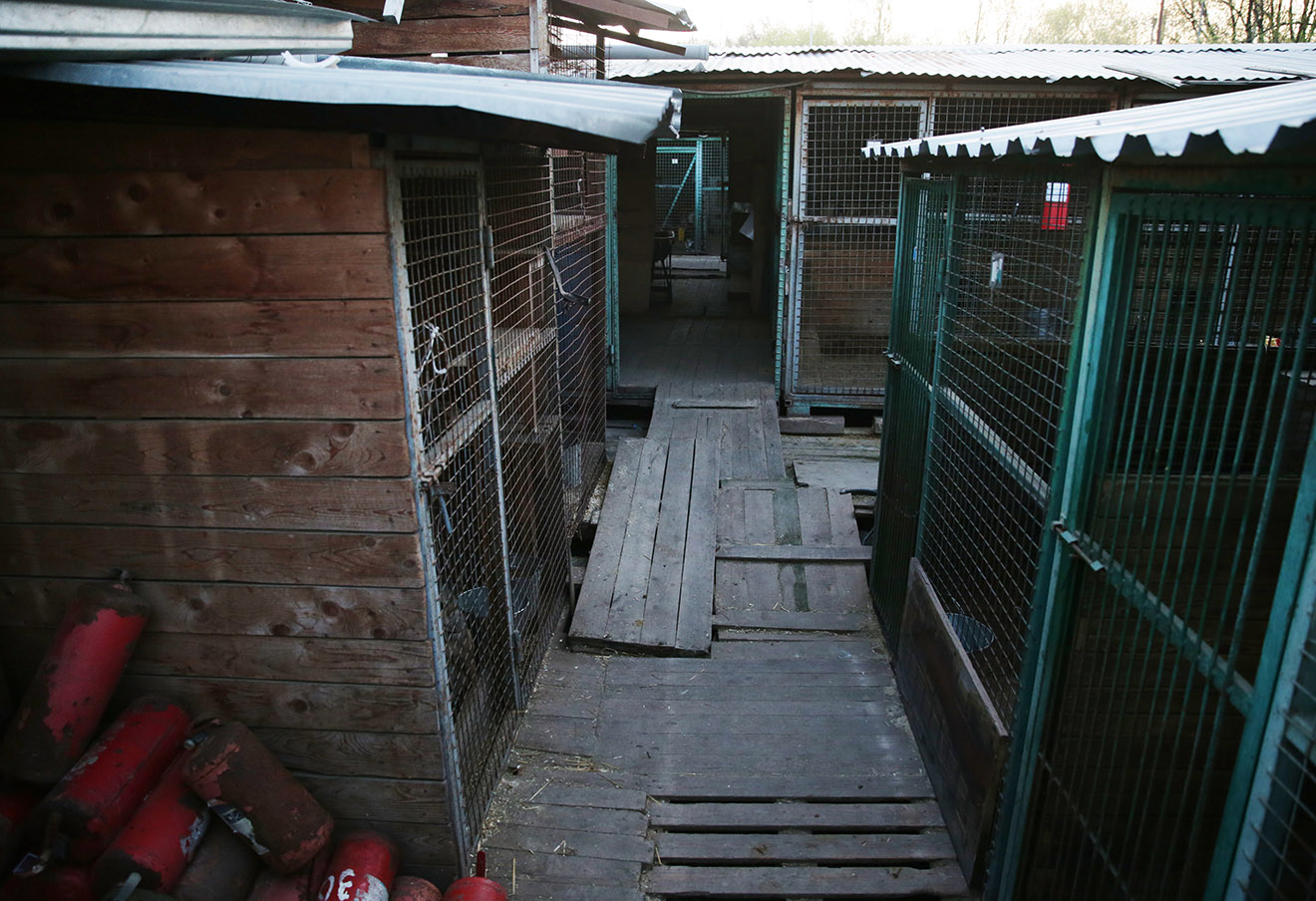 Территория частного приюта «Вешняки» на улице Аллея Первой Маевки.