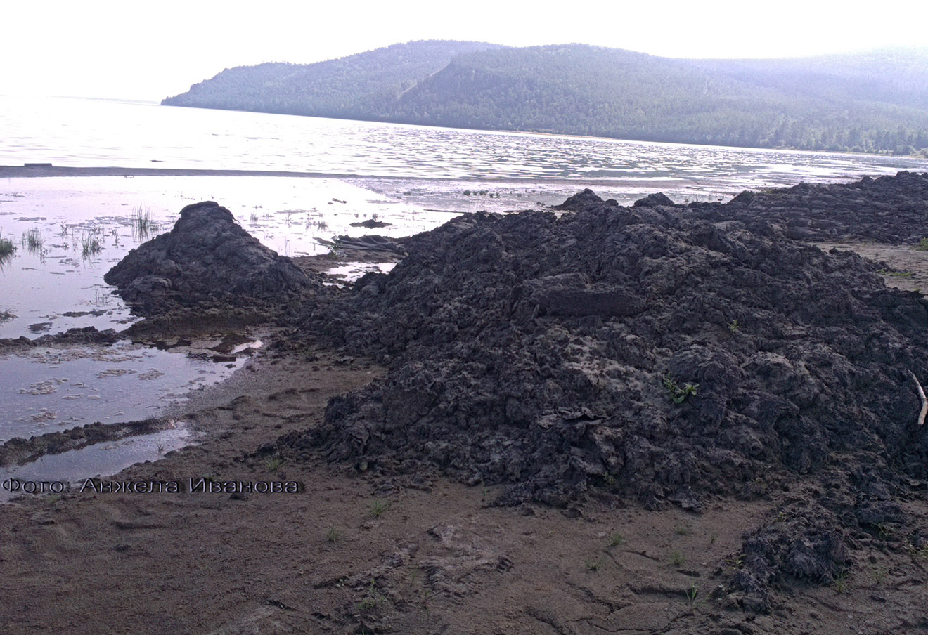Кучи гниющих водорослей на берегу бухты Сеногда. Фото: Анжела Иванова