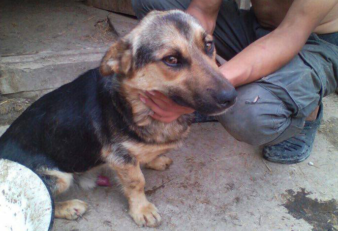 Собака в «цехе» Толика. Фото: Амаль Баева