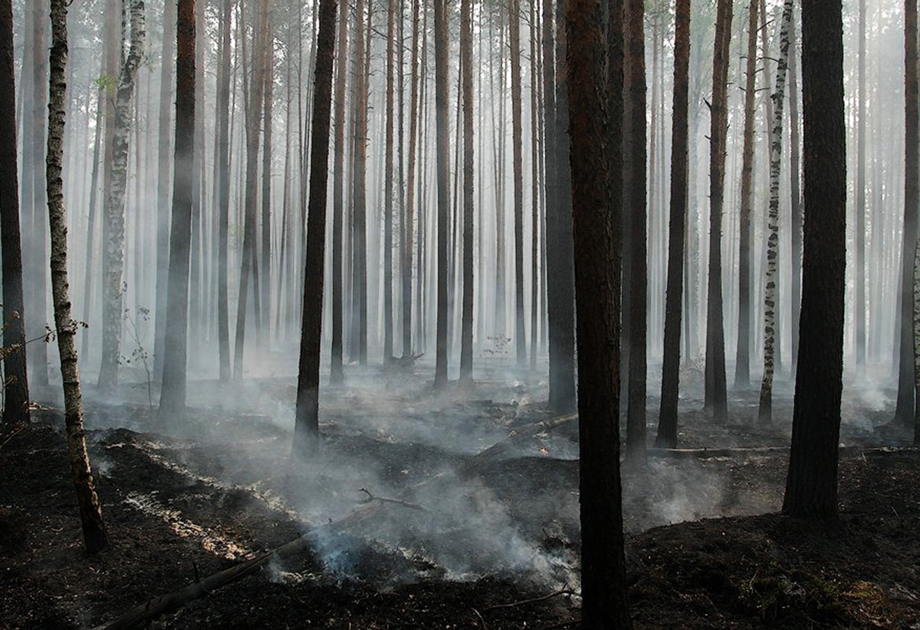Последствия лесных пожаров в России, 2010 год. Фото: Игорь Подгорный / Greenpeace