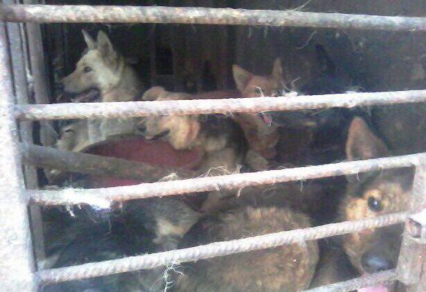 Собаки, обнаруженные полицией и зоозащитниками в доме Толика. Фото: Амаль Баева