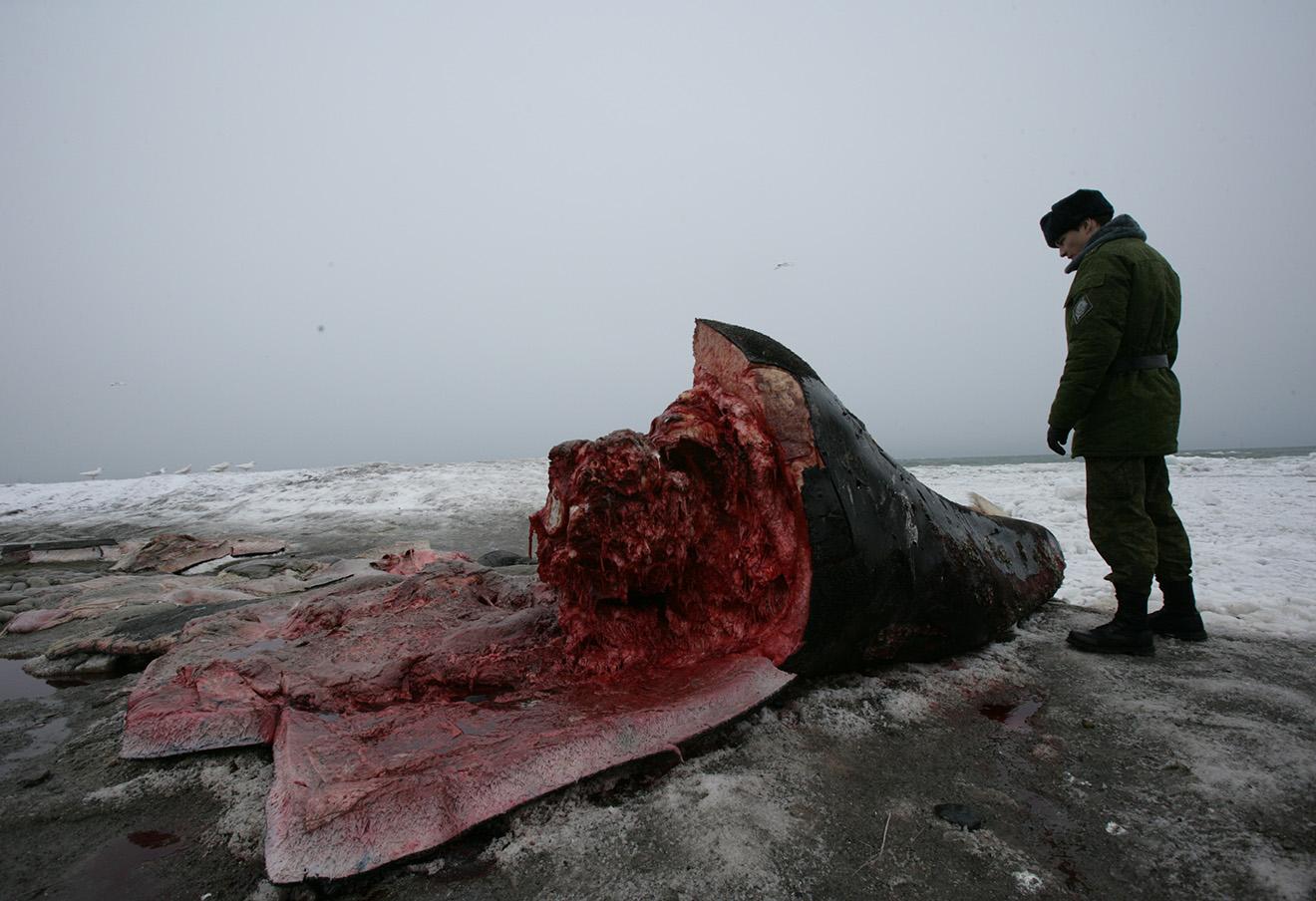Туша кита в селе Лорино, Чукотка.
