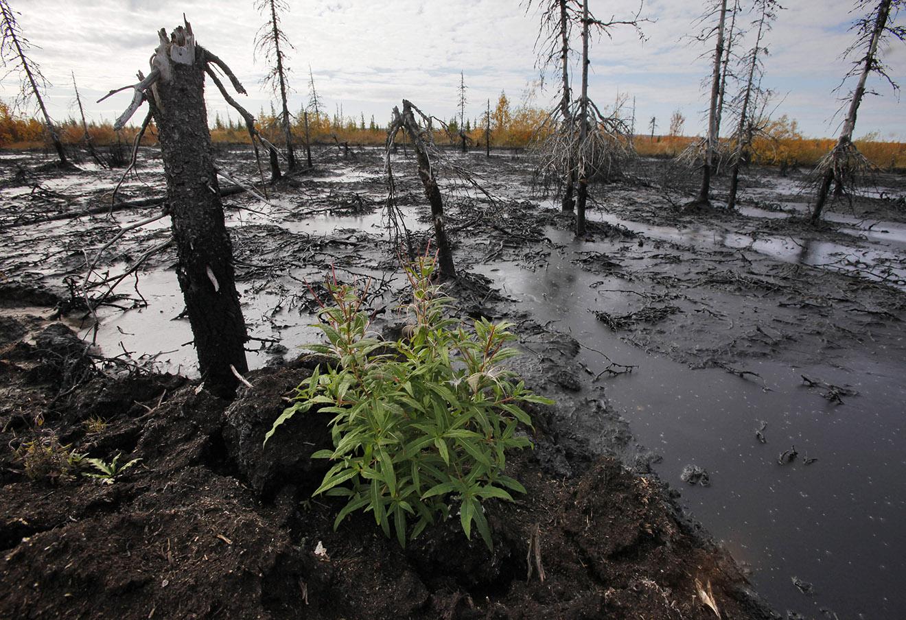 Разлив нефти в Усинске.