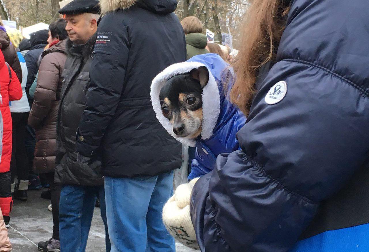 Митинг в защиту животных в Москве, 5 ноября 2016 года. Фото: Открытая Россия